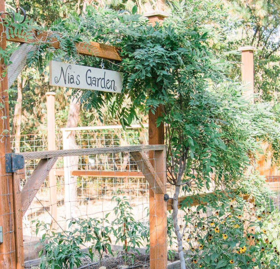 Nia's Harvest Gardens